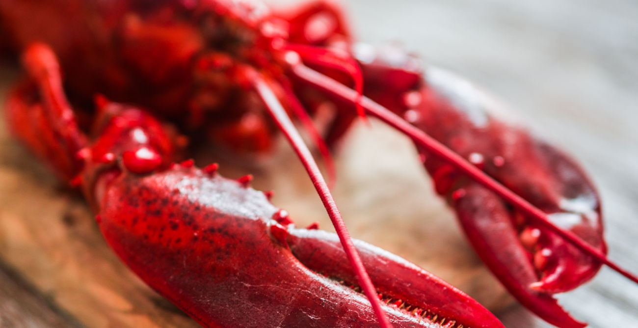 Serving and side dish ideas for lobster